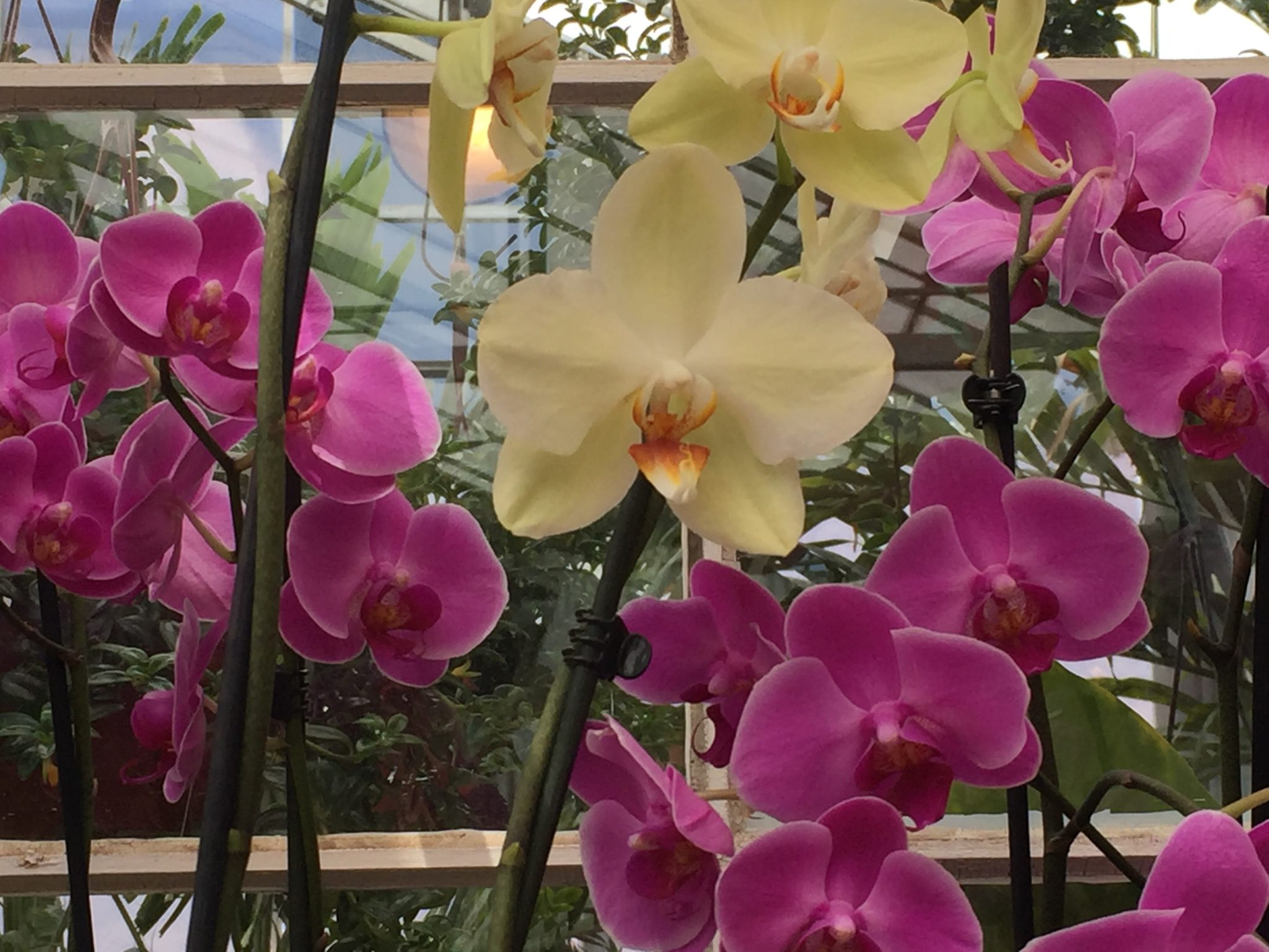 Orchids, Houseplants for sale in Bowie, MD