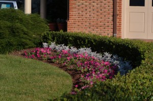 Softscaping in Bowie