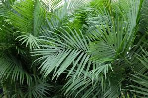 Palms_05