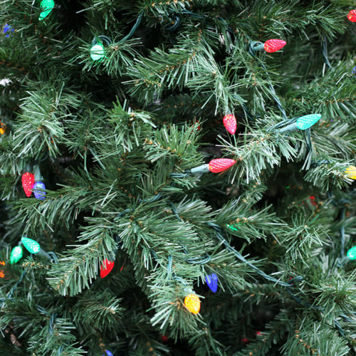 Christmas Trees for Sale - Patuxent Nursery