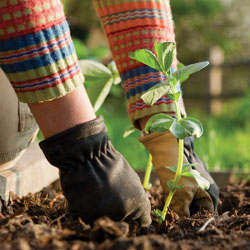 7 Reasons Why You Should Plant Your Spring Garden in the Fall