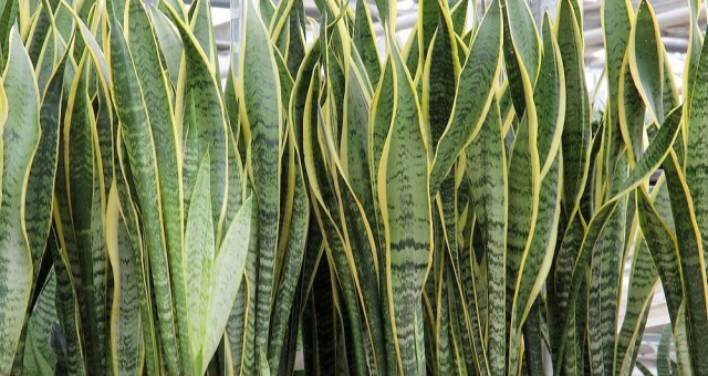 The Best Potted Plants for Father's Day