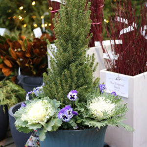 container gardens for sale at Patuxent Nursery
