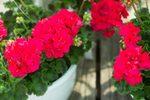 Top Mother's Day Gifts - Patuxent Nursery