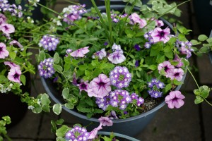 Container Gardening - Patuxent Nursery