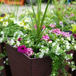 Container Gardening: How to Get Started