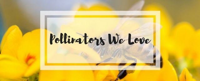 Pollinators We Love
