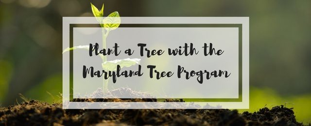 Plant a Tree with the Maryland Tree Program