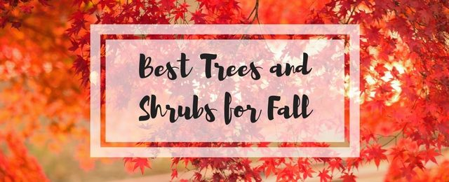 The Best Trees and Shrubs for Fall