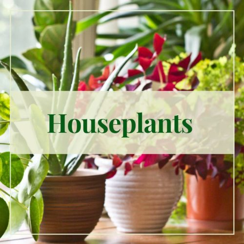 Fall Houseplants