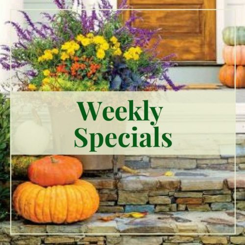 Fall Weekly Specials
