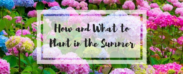 How and What to Plant in the Summer