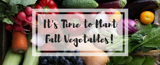 It's Time to Plant Fall Vegetables
