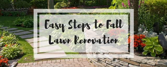 Easy Steps to Fall Lawn Renovation
