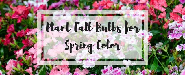 Mixing Annuals and Perennials for Fall Color