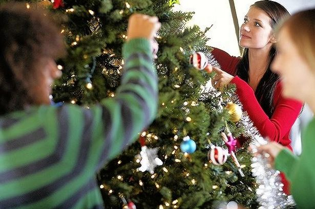 Caring for Your Live Christmas Tree - Patuxent Nursery
