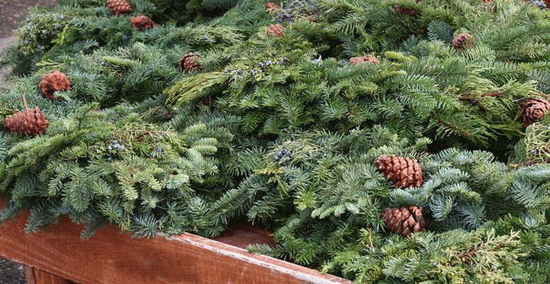 Get Your Fresh Cut Christmas Greenery at Patuxent Nursery