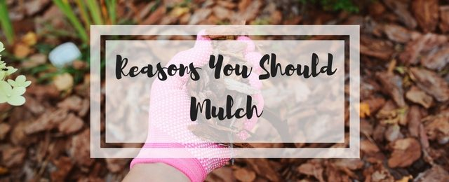 6 Reasons You Should Mulch