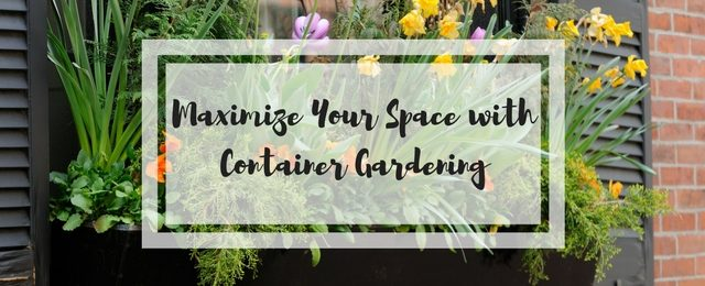 Maximize Your Space with Container Gardening