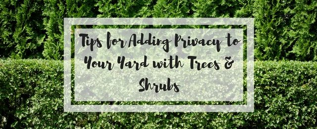 3 Tips for Adding Privacy to Your Yard with Trees and Shrubs