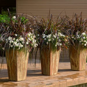Maximize Your Space with Container Gardening | Patuxent Nursery