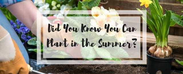 Did You Know You Can Plant in the Summer?
