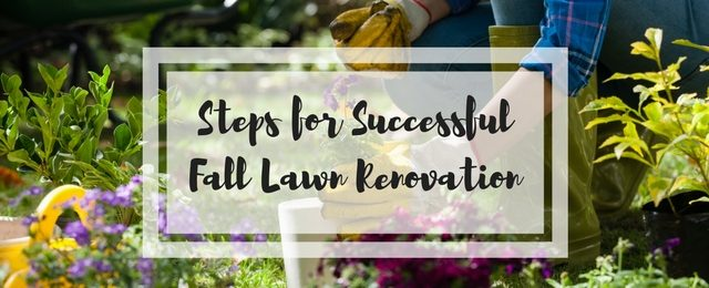 8 Steps for Successful Fall Lawn Renovation