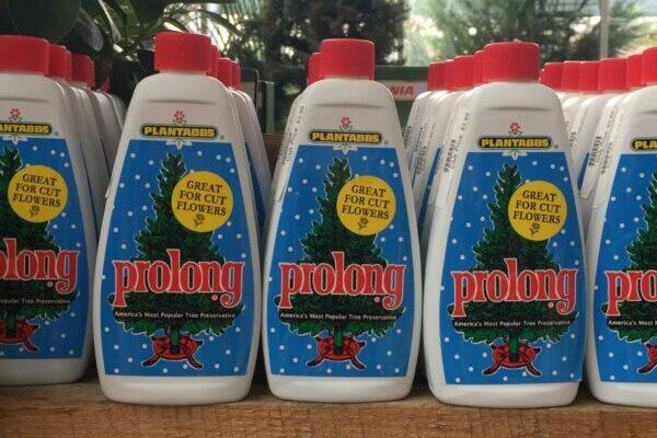 Prolong - Christmas Tree Supplies at Patuxent Nursery