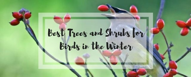 Best Trees and Shrubs for Birds in the Winter