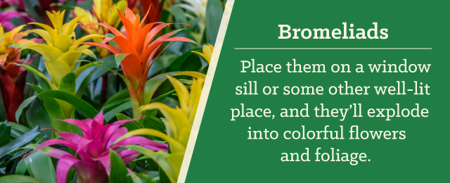 bromeliads as gifts - 15 Gifts All Plant Lovers Will Adore - Patuxent Nursery, Bowie, MD