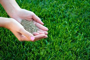 Lawn and Garden Care- Grass Seed in Bowie, MD