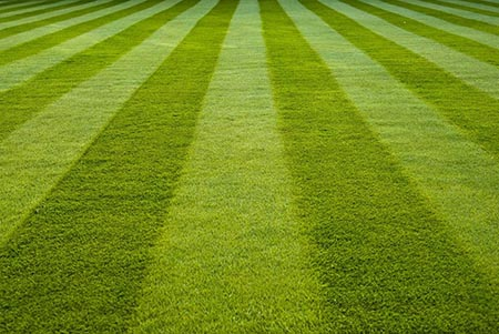 Lawn Disease Control- Lawn and Garden Care for Sale in Bowie, MD   Patuxent Nursery
