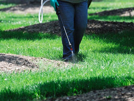 Lawn Pest Control - Lawn and Garden Care for Sale in Bowie, MD   Patuxent Nursery