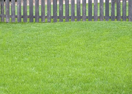 Lawn Weed and Feed - Lawn and Garden Care for Sale in Bowie, MD   Patuxent Nursery