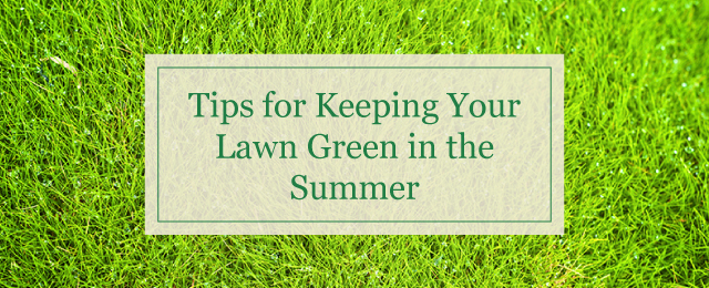 Tips for Keeping Your Lawn Green in the Summer