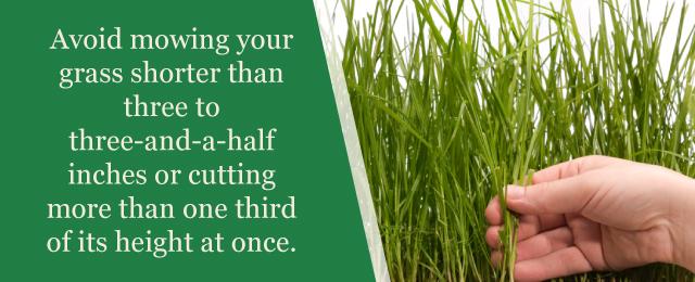 Avoid Mowing Grass Short