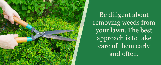 Removing Weeds Lawn Care