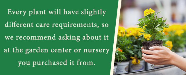 Best Potted Plants For Mother S Day Patuxent Nursery