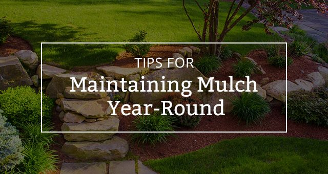 Tips for Maintaining Mulch Year-Round