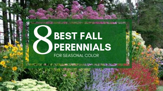 8 Best Fall Perennials for Seasonal Color