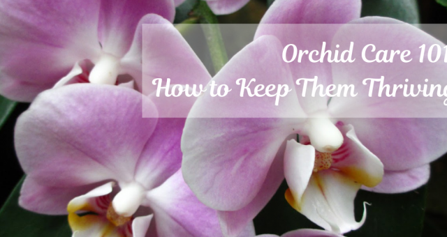 Orchid Care 101: How To Keep Your Orchids Thriving