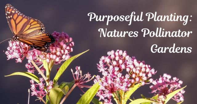 Purposeful Planting: Nature's Pollinator Gardens