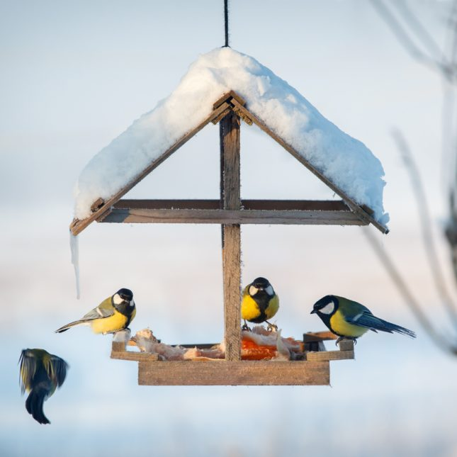 Winter Birds feeding from a covered feeder in snow