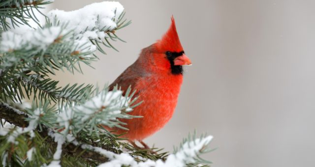How to Feed Birds During Winter