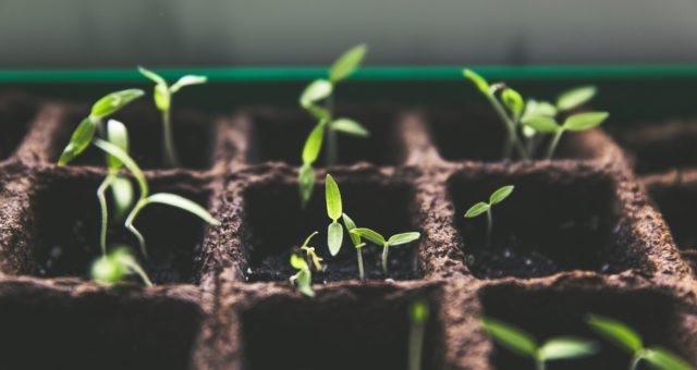 The Ins and Outs of Indoor Seed Starting