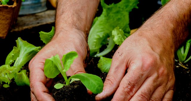 Planning Your Vegetable Garden for Spring