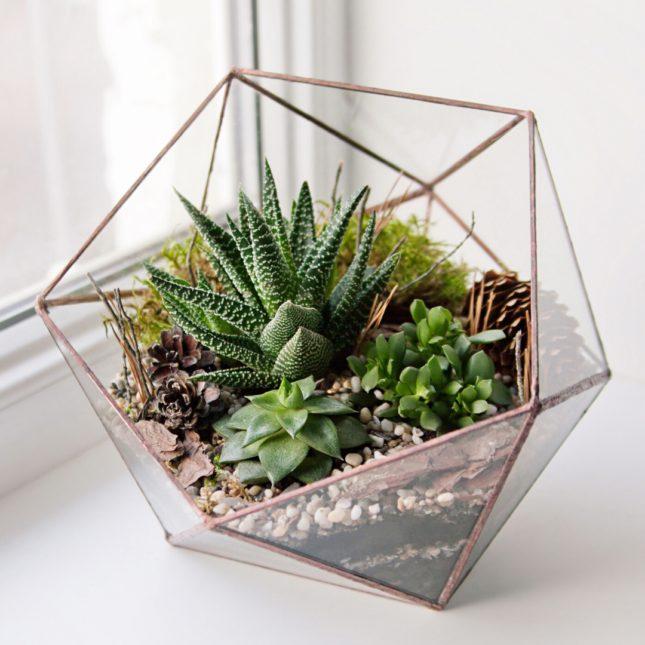 Succulents make great plants for terrariums