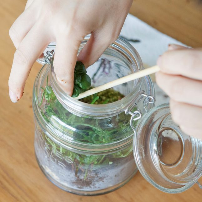 You can use just about any glass container to make a terrarium
