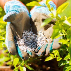 fertilize your organic vegetable garden
