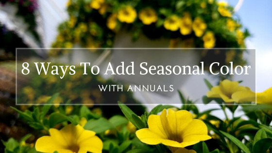 8 Ways You Can Add Seasonal Color With Annuals